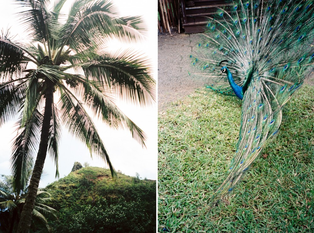 hawaii film photographer_0130