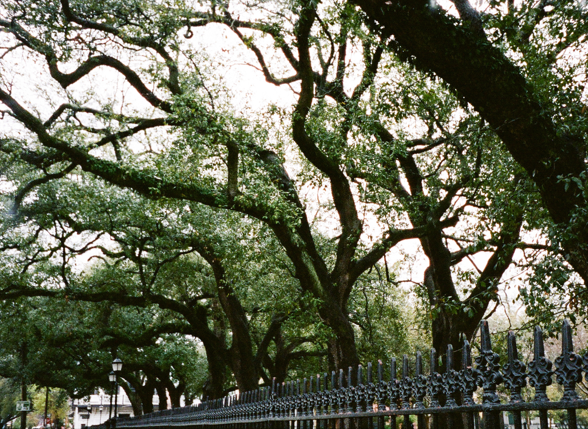 new orleans film photographer_0014