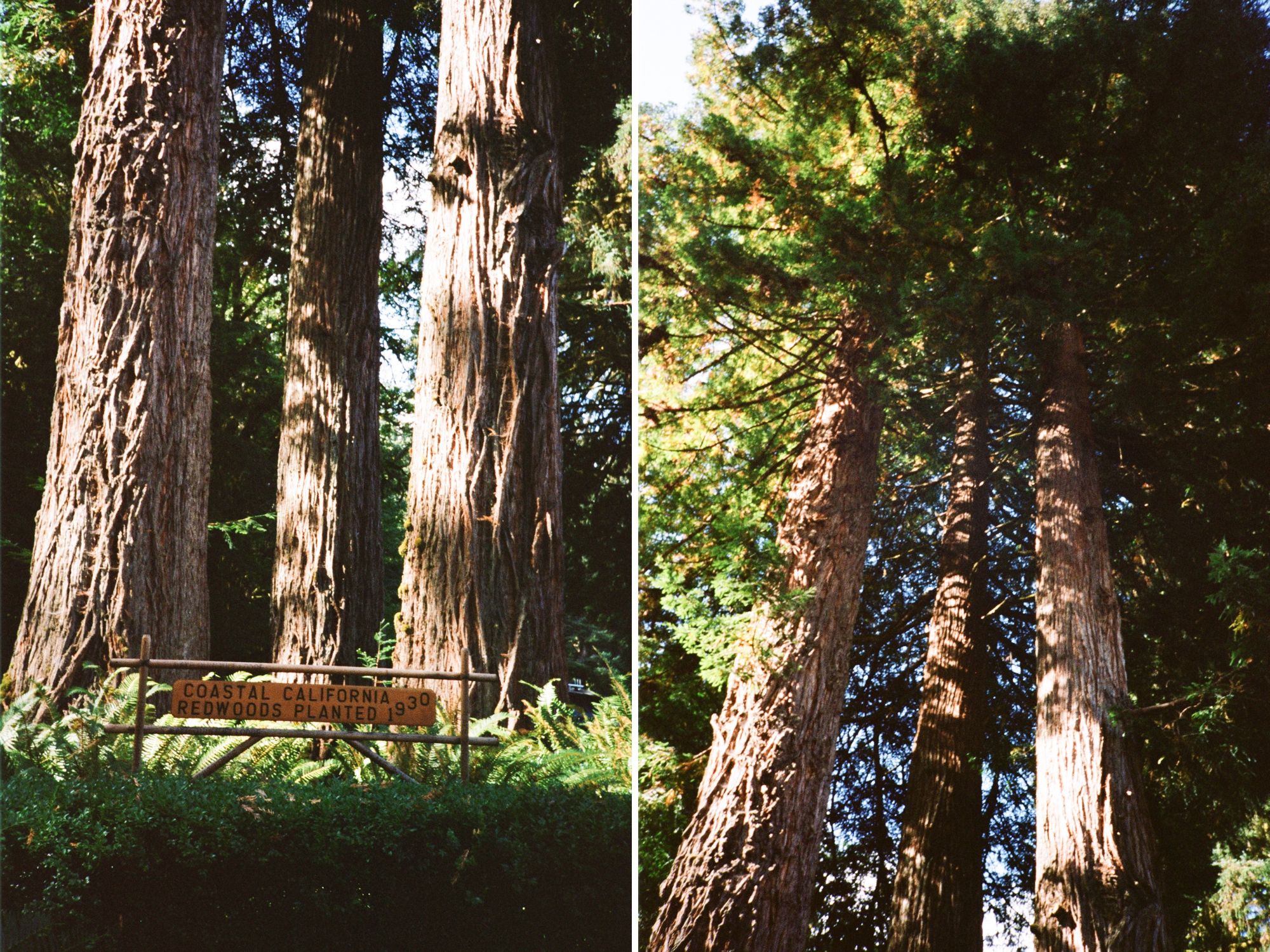 PNW film photographer_0006