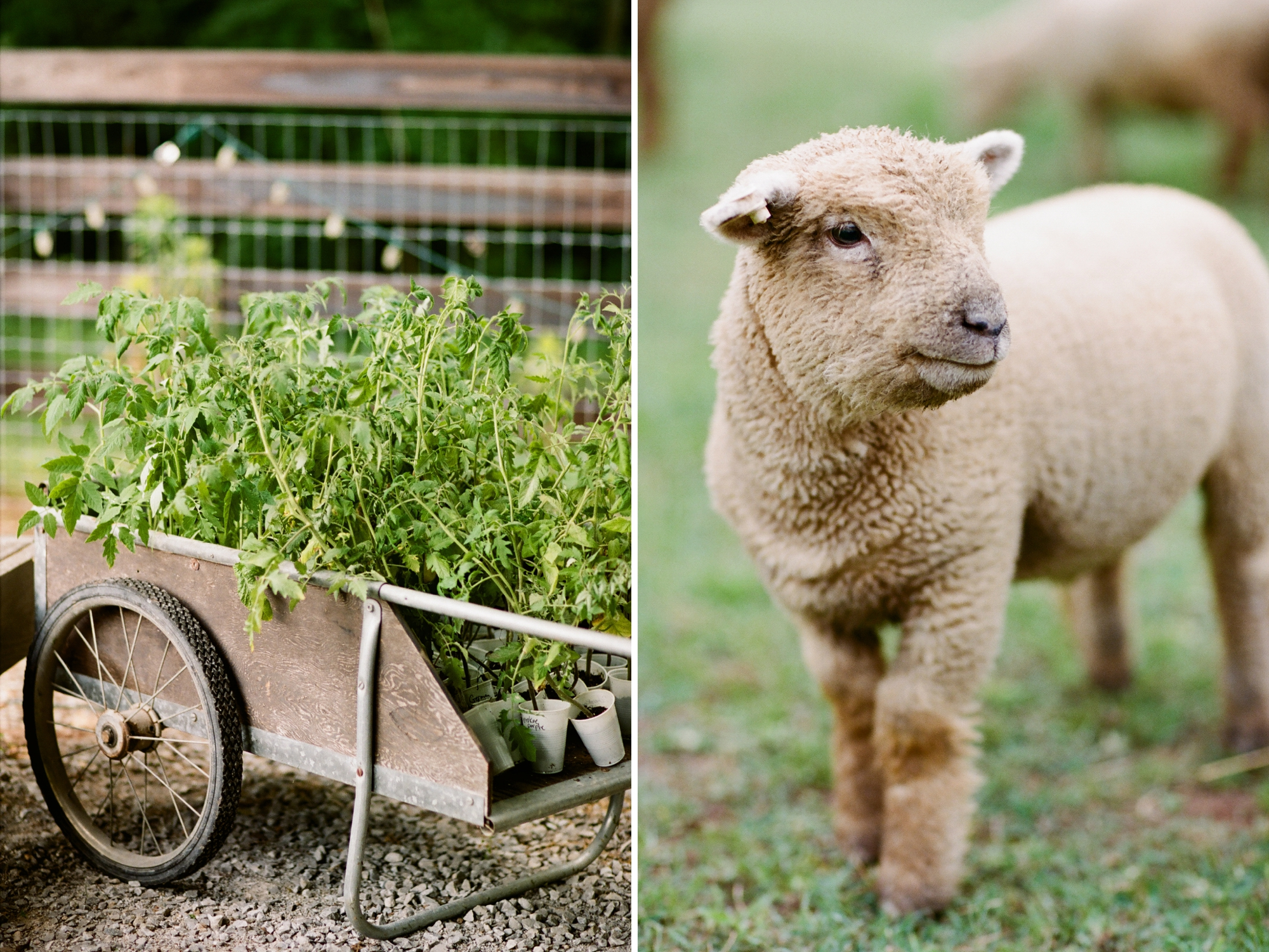 farm to table dinner_0003