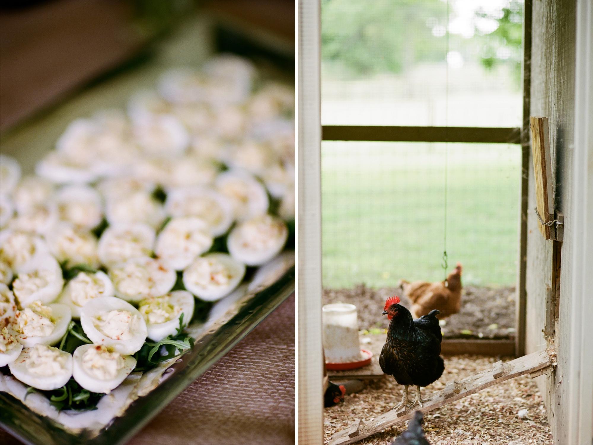 farm to table dinner_0011