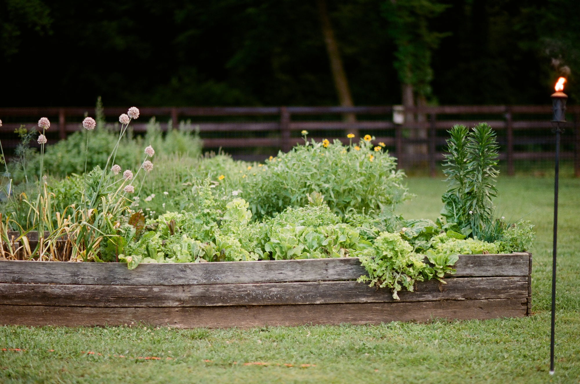 farm to table dinner_0025