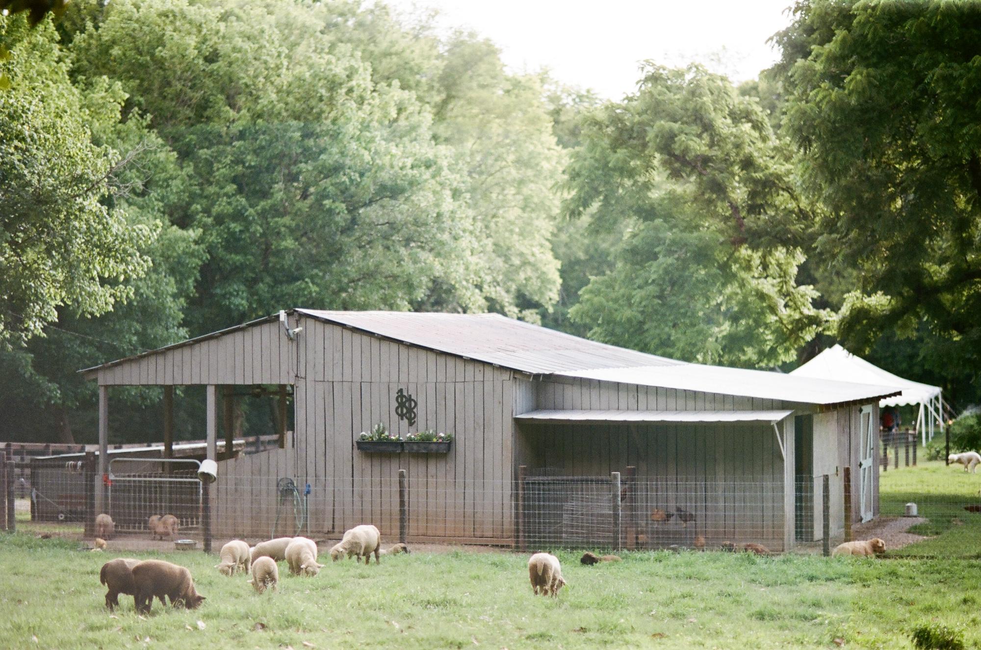farm to table dinner_0027