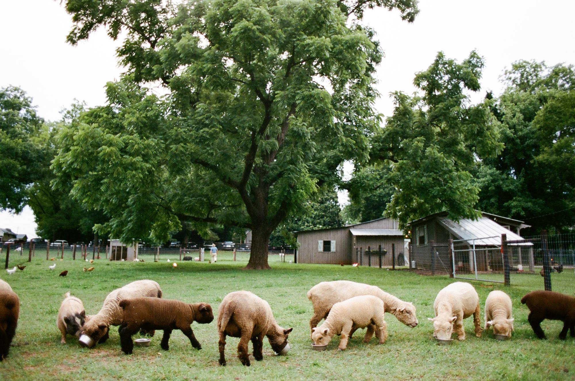 farm to table dinner_0037