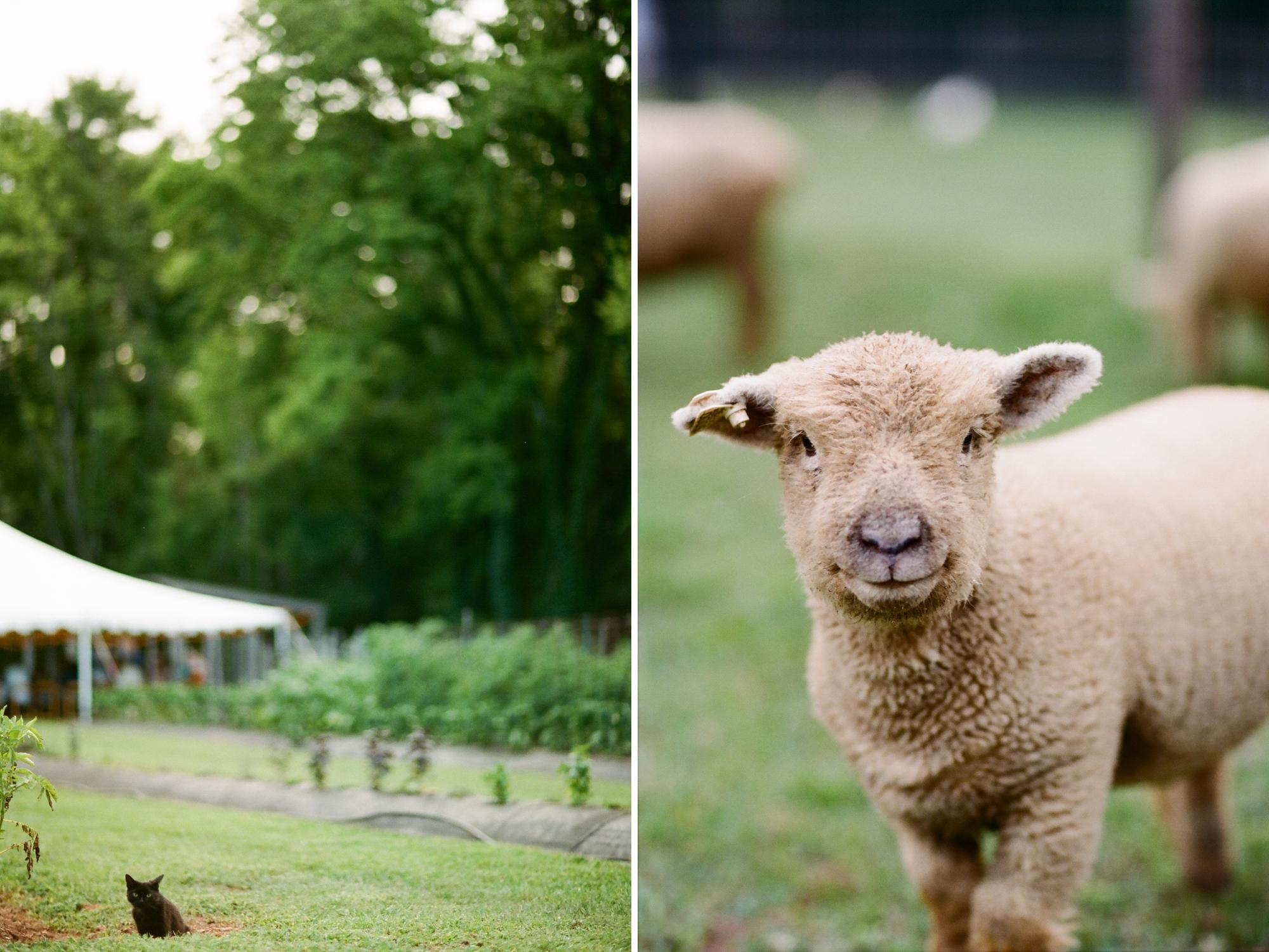 farm to table dinner_0038