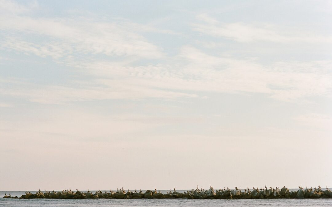 Sophie & Frank: St. George Island Engagement