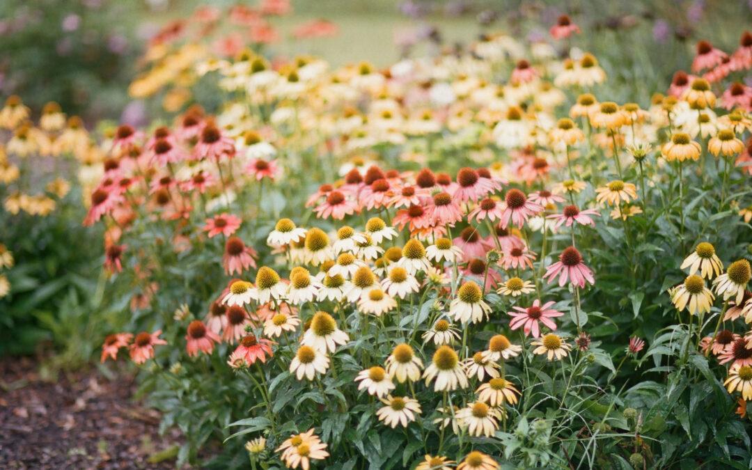 Rosalie & Taylor: Botanical Gardens Wedding